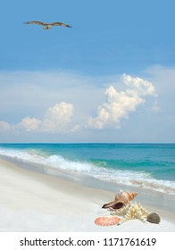 Seashells on a Beautiful White Sand Florida Beach as a Osprey Flies Overhead