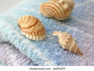 Seashells on a colorful furry towel
