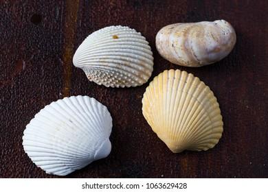 Seashells on land
