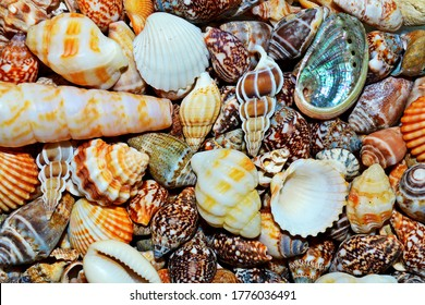 Seashells on ocean sea beach pattern texture, shell tropical background. Seashell exotic background pattern, various mollusk shell above. Summer seashells concept, shells conch, cowrie, clam top view