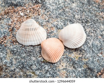 Seashells on the rocks at the beach close up. Relaxation at sea in countries with cold climates. View from above. The concept of freedom and travel.