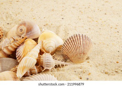Seashells on sand background