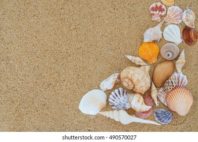 Seashells on sand background with room for text
