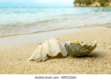 Seashells on sand at beach. Togean Islands or Togian Islands in the Gulf of Tomini. Central Sulawesi. Indonesia