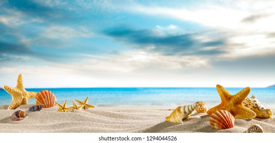 Seashells on the sand by the sea on a hot sunny day