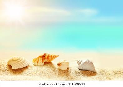 Seashells on the sandy beach. Summer time.