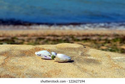 seashells on stone near sea