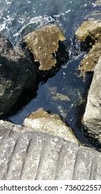 Seashells on stones