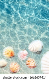 Seashells on the summer beach in sea water. Summer background. Summer time.