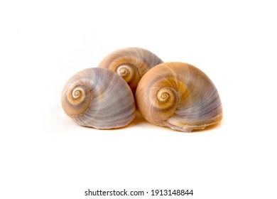 Seashells on a white background
