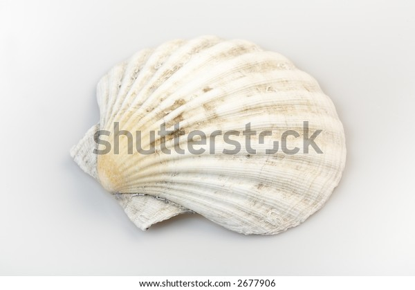 seashells on white background