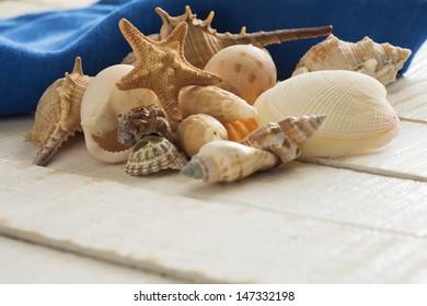 Seashells on wooden background. Selective focus.