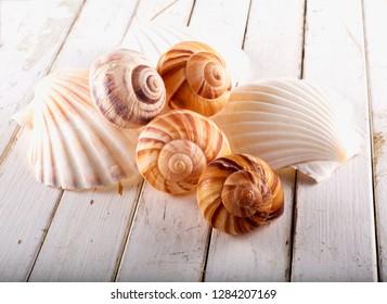 Seashells over white wooden table, horizontal image