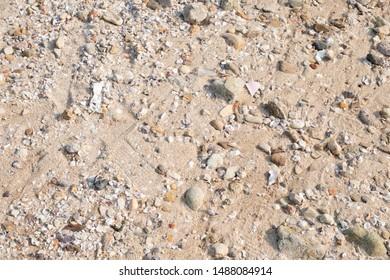 Seashells and rocks on sand beach. Texture background.