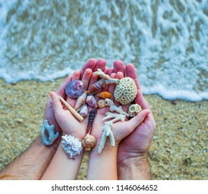 seashells and sand, seashells in hands on the background of the sea, family, father's and son's hands, child and parents on a trip, the ocean seashore, hands of mother and daughter