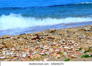 seashells and sea foam near the shore