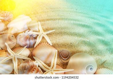 Seashells and sea starfishes on sea bottom