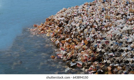 Seashells at the seashore