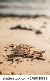 Seashells and seastars on the sand, summer beach background travel concept