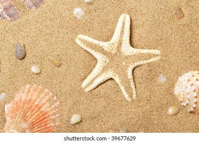 Seashells and a starfish lie on sand seacoast