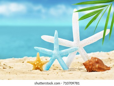 seashells and starfish on the summer beach with sand