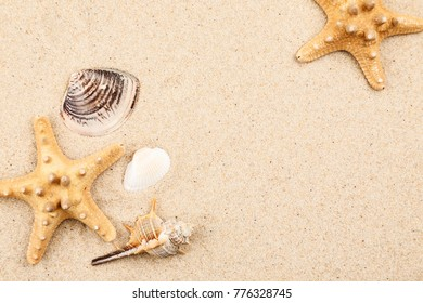 Seashells and starfish in sand on a beach, text space