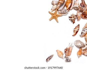 Seashells and starfishes isolated on a white background. Top view. Text space.