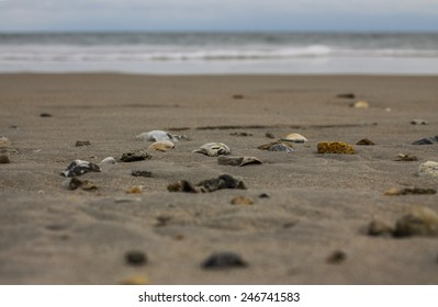 Seashells.  Topsail, NC