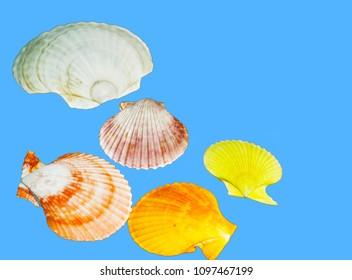 Seashells of the tropical sea
