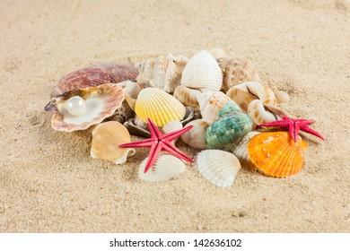 seashells und starfish on sand