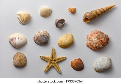 Seashells of various shapes and types. Background.