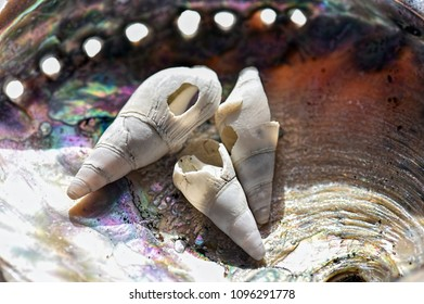 Seashells - We are all fragile, we are all perfect, we are all beautiful... naturally.