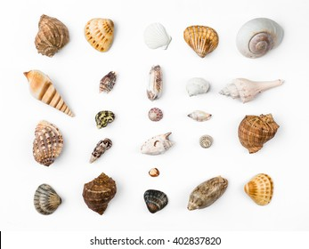 seashells, white background