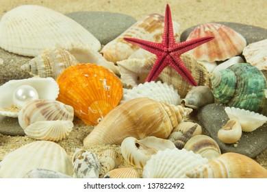 seashells,pearl, starfish on sand