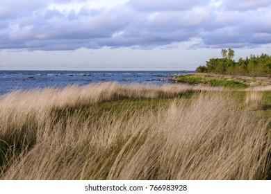 Seashore with autumn grass, Saaremaa, Estonia