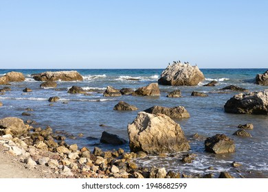 Seashore with brown stones and birds sitting on them