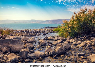 Seashore near Ein Eyov Waterfall in Tabgha, Sea of Galilee, Israel