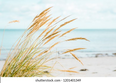 Seaside beach in autumn. Tranquil and peaceful scenery. Sandy beach of Latvian coastline.