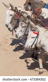 seaside donkeys lined up in a row