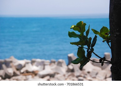 Seaside leaves