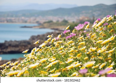 Seaside meadow in bloom in springtime on the island of Crete, Greece