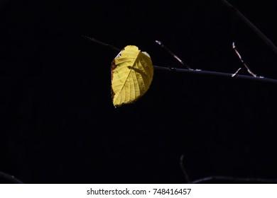 The season of autumn leaves