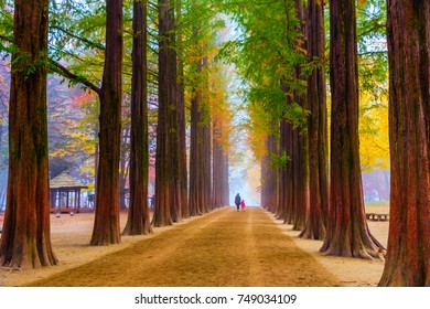 Season, Autumn tree at Namiseom Island, South Korea,
