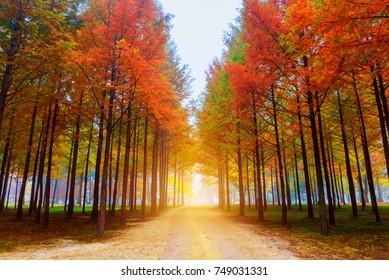 Season, Autumn tree at sunrise in Namiseom island, South Korea.