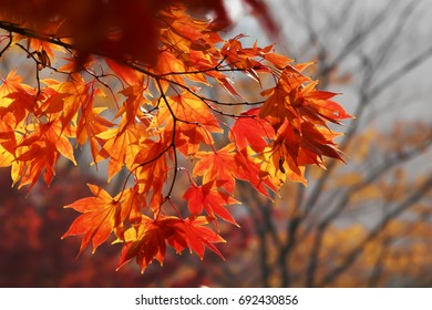 Season of beautiful autumn leaves