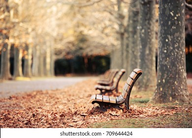 Season of fallen leaves. Park in Tokyo,