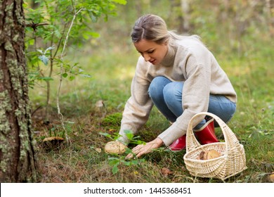 season and leisure people concept - young woman with basket picking mushrooms in autumn forest