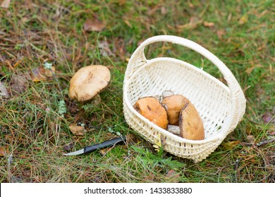 season, nature and leisure concept - wicker basket with brown cap boletus mushrooms and knife in autumn forest