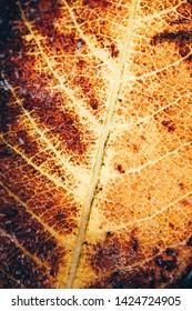 season specific, yellow frozen leaf, beauty in nature