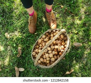 Season of wallnuts